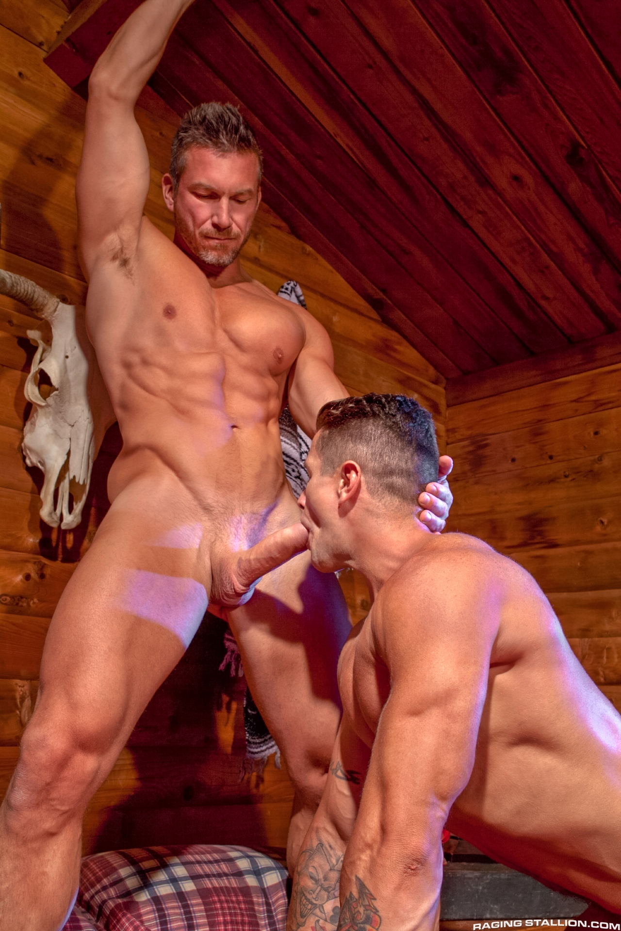 raging stallion